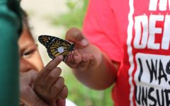 A tagged monarch is released for migration at the Manasquan Reservoir Environmental Center