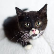 Consider Fostering a Kitten