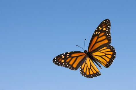 Volunteers, Donors Needed to Build Butterfly Garden