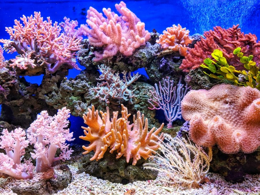 Take Steps to Save Coral; It Affects You More than You Know